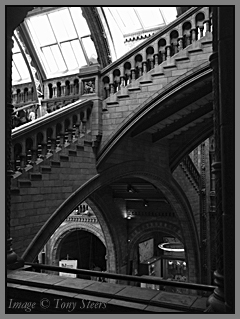 natural history museum stairways